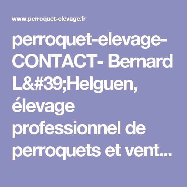 perroquet-elevage- CONTACT- Bernard L'Helguen, élevage professionnel de perroquets et vente : gris du gabon, ara, eclectus, cacatoès, amazone, 29, finistère