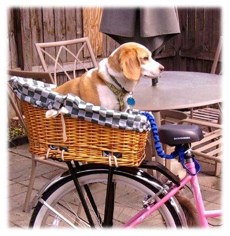 Best Summer Tires >> Dogs on Bikes   Dog bike basket, Biking with dog, Dog gadgets
