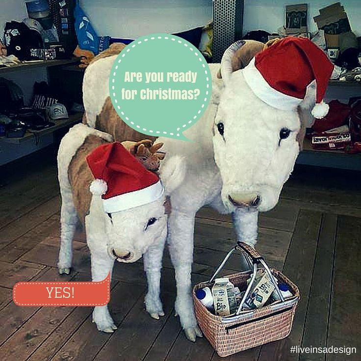 We are ready for #christmas! And you? These are our #mascot in our showroom of Trento :)  #christmasiscoming   #liveinsadesign   #christmas2015