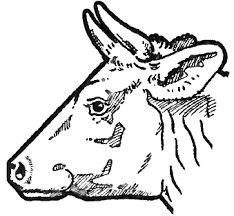 Image result for how to draw a cow face