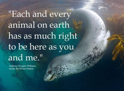 Each and every animal on earth has as much right to be here as you and me