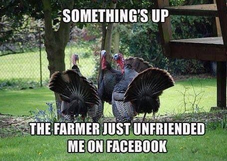 Thanksgiving humor…..Something's Up