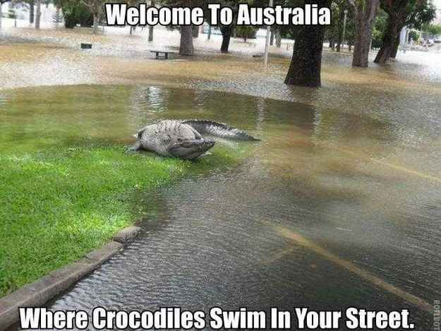 Crocodiles in the street.   37 Pictures That Prove Australia Is The Craziest