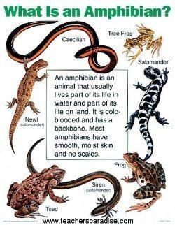 Do you know the difference between reptiles and amphibians? This will help.