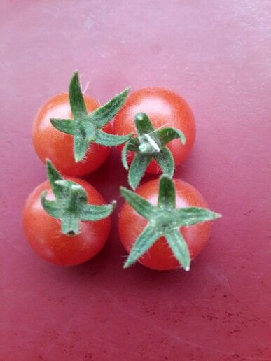 Tomatoes can be pretty