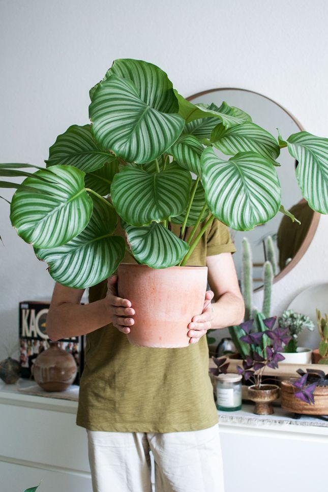 Urban Jungle Bloggers - Plantselfie by @igorjosif