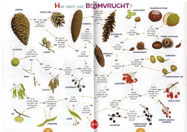 Zoekkaart boomvruchten 1