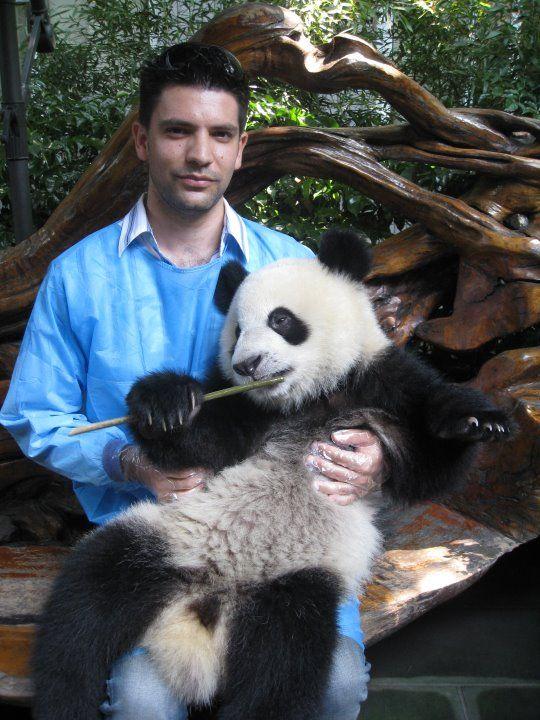 Do we accept pandas in Sheraton?