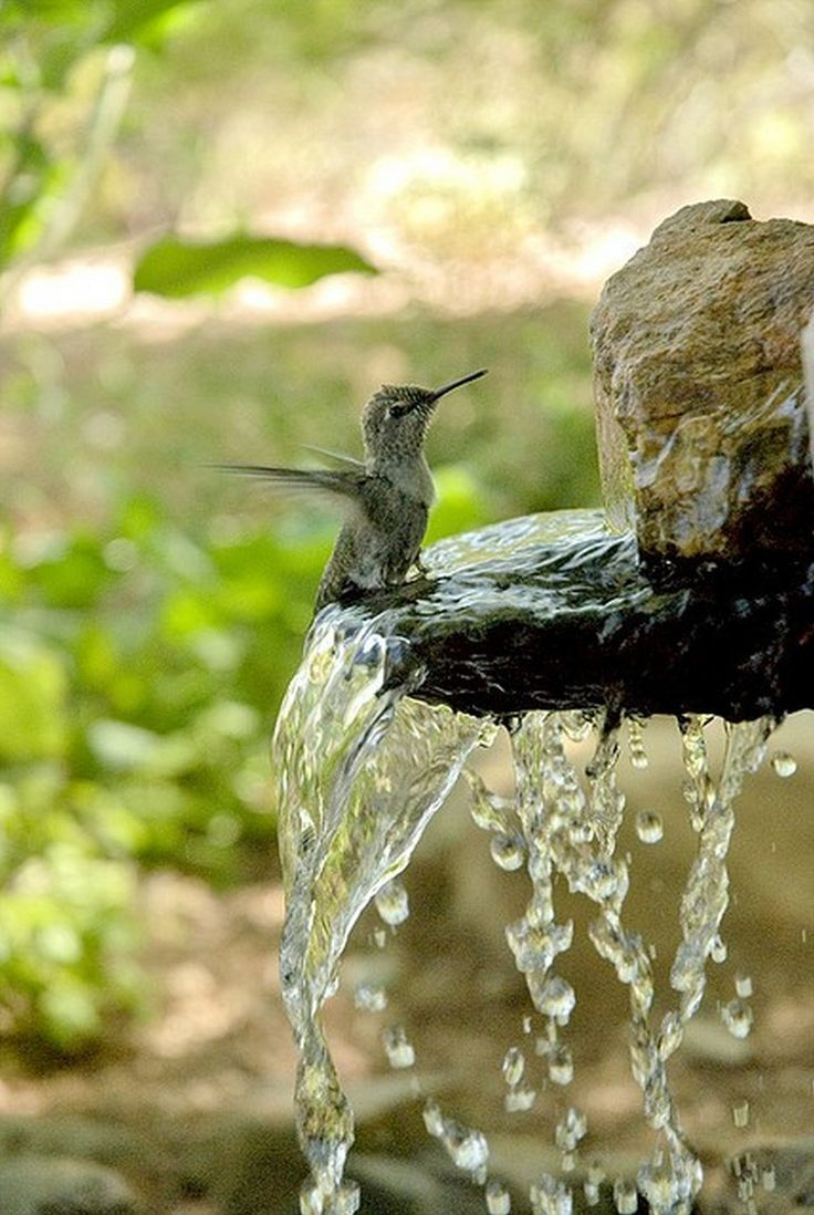Talavera ceramic birdbaths eclectic bird baths phoenix by -  Rustic Birdbath Idea Delightful To See The Tiny Humming Bird Bathe Or Maybe He Is Just Having A Small Drink To Tune His Throat From All That Humming