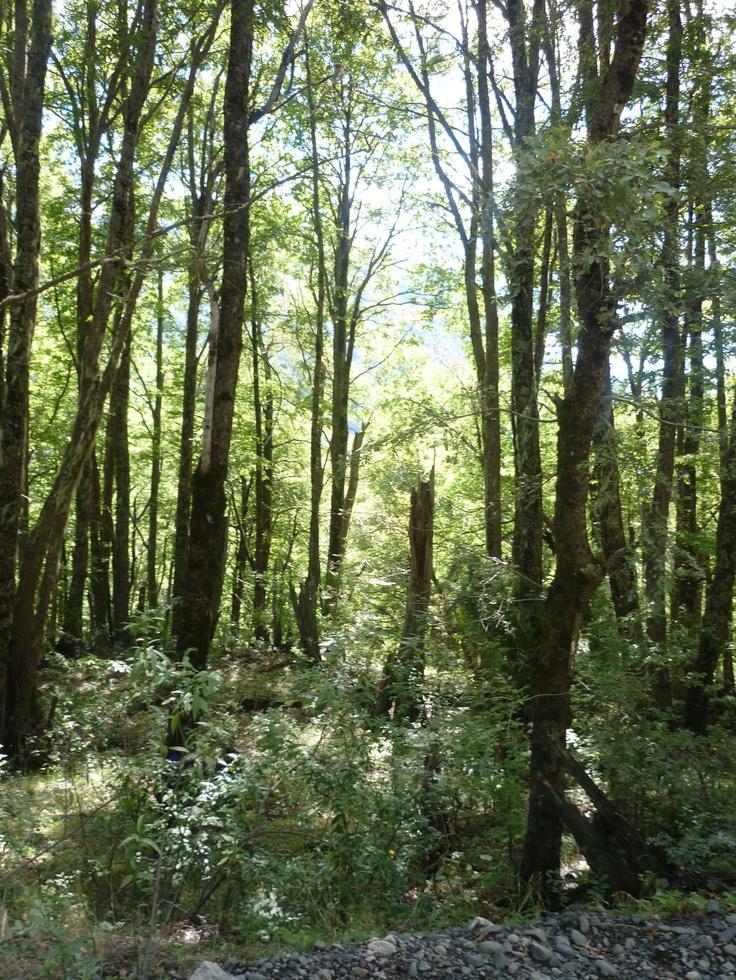 Alumnos en reconocimiento del sector forestal
