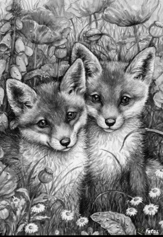 17 best images about wild animals on pinterest coloring coloring books and black and white. Black Bedroom Furniture Sets. Home Design Ideas