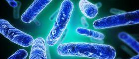 Come I Probiotici Possono Alleviare L'Ansia Sociale