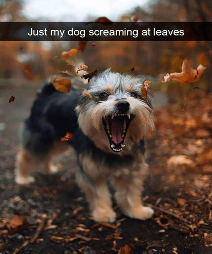 40 Funny Animal Memes #funnydogs