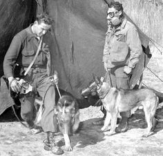 vintage everyday: Against Threat of Chemical Warfare – Vintage Photos Show Dogs Wearing Gas Masks during the Wars
