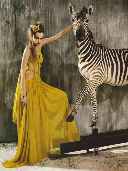 zebra & model