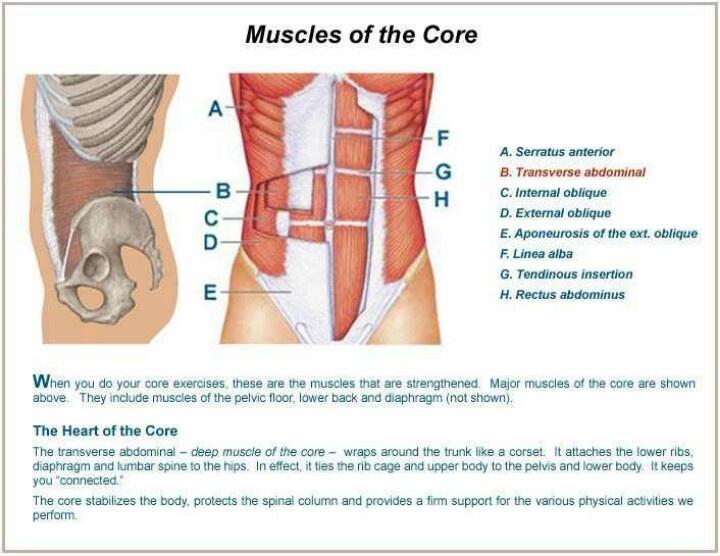 Core Muscles: Core Strength Quiz