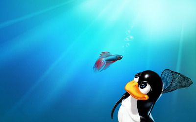 Penguin catching a fish wallpaper