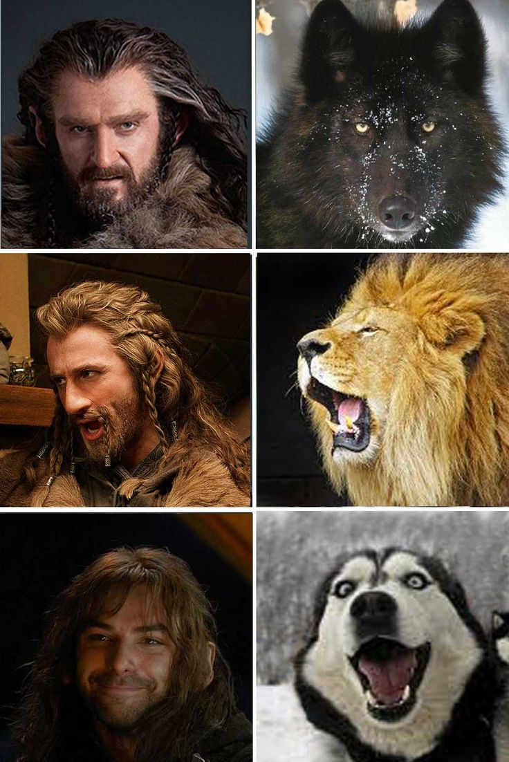 """Thorin, the majestic wolf. Fili, the proud lion, and Kili.....the.....happy puppy."" And somehow this is reallly fitting."