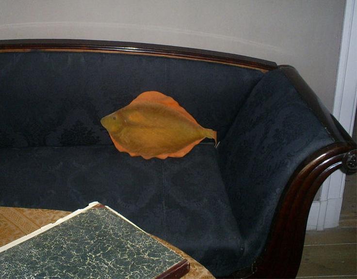 """Pude, formet som en fisk fra Ellested vandmølle på Frilandsmuseet. Rødspætten blev indkøbt af Anna Hellesens forældre til pynt i sofaen i den fine stue, som kun blev brugt ved særlige lejligheder. Den er et typisk """"morsomt"""" håndarbejde fra klunketiden. Rødspætten blev indkøbt af Anna Hellesens forældre til pynt i sofaen i den fine stue, som kun blev brugt ved særlige lejligheder. Den er et typisk """"morsomt&#8221..."""