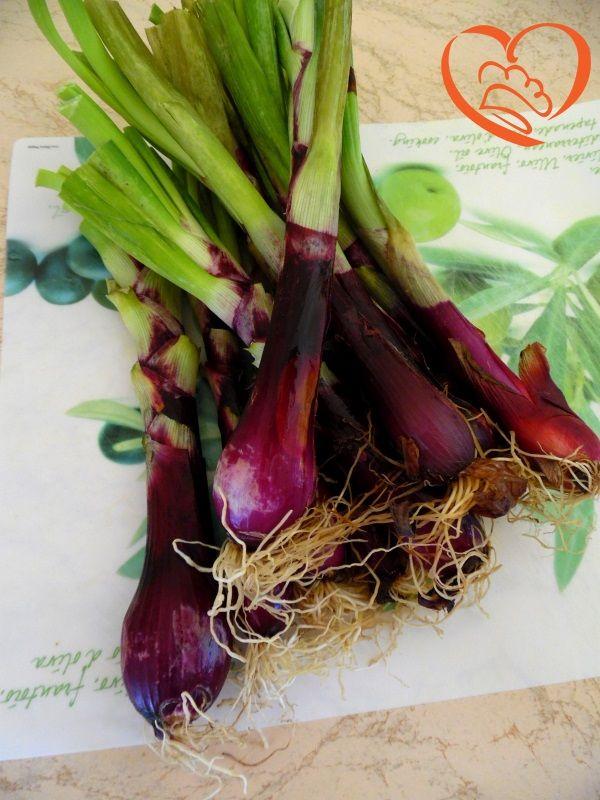 Cipollotti viola http://www.cuocaperpassione.it/foodfoolio/5b2c1f4c-9f72-6375-b10c-ff0000780917/Cipollotti_viola