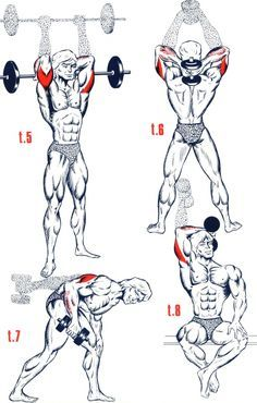 Triceps1                                                       …                                                                                                                                                                                 Plus
