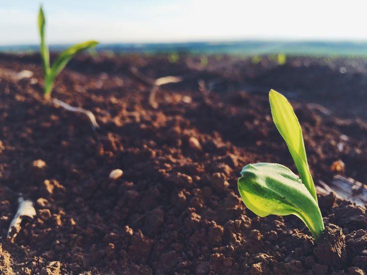 🇬🇧We never know how long it will take if we harvest the crop. One of the things I learn in my business.  *from my business - www.michalbotansky.com 🔼🔼🔼 . 🇸🇰Nikdy nevieme ako dlho bude trvať, pokiaľ budeme zbierať úrodu. Jedna z vecí čo sa učím v mojom biznise. *z môjho biznisu - www.michalbotansky.com 🔼🔼🔼