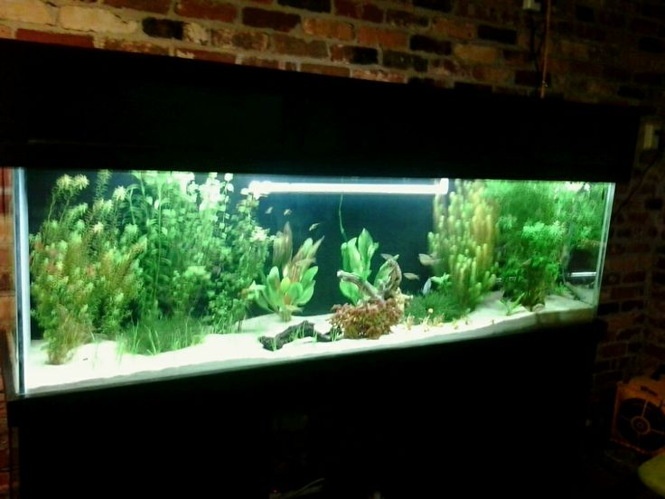 16 best marc 39 s 125 gallon planted aquarium images on for 125 gallon fish tank stand