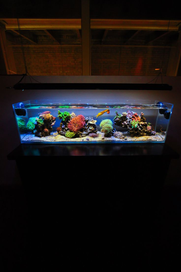 1000 ideas about 30 gallon fish tank on pinterest blue for Two gallon fish tank