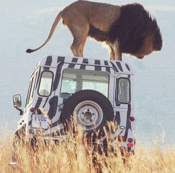 Land Rover Car Wallpaper: 109 Best Images About Land Rover N Friends On Pinterest
