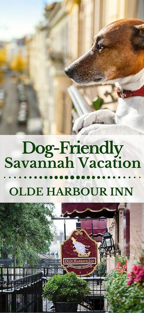 Pet Friendly Savannah Hotels