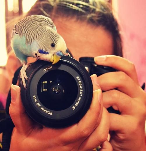 Takin' pictures.