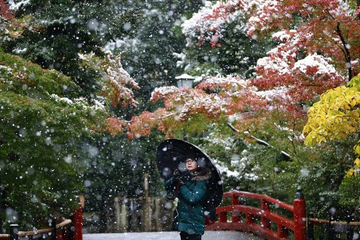 Tokyo experienced its first November snowfall in 54 years. Residents of the Japanese capital were taken by surprise, as the temperatures around this time of the year usually range from 10C to 17C. The current snowfall marks the first time fallen snow has been seen on the ground in Tokyo in November since records started to be taken in 1875.
