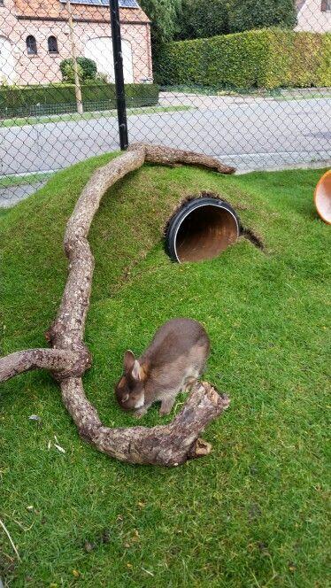 Konijnen tunnel gemaakt met afwateringsbuis (pvc)