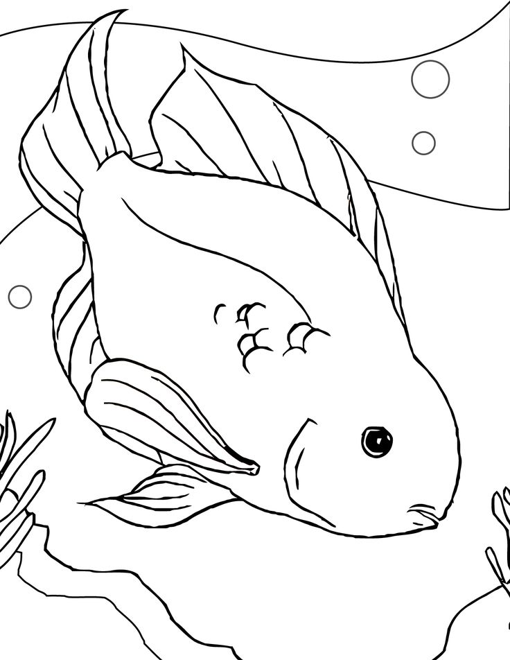 fish color sheets printable that you can save and print for your childrens coloring activity media - Drawing For Children To Colour