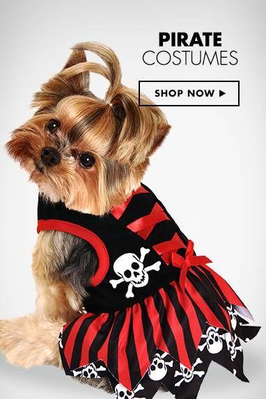 Best 25+ Dog pirate costume ideas on Pinterest | Female ...