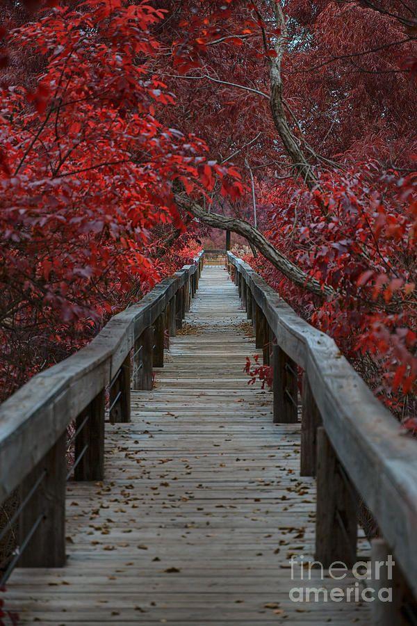 The Boardwalk, Fort Worth Nature Center and Refuge, Texas   Douglas Barnard