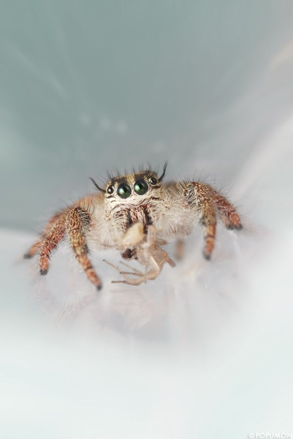 98 Best Arachnid Love Images On Pinterest  Spiders Hand Spinning Unique Small Jumping Bugs In Bathroom Design Decoration