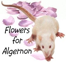 best flowers for algernon images flowers for  flowers for algernon study questions book report on flowers for algernon