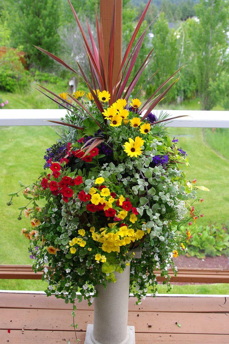 Flowers include: Dracaena, Licorice Plant, Bacopa, Lobelia, Calibrachoa, Nemesia, Osteospermum, Marine Plant, Trailing Verbena and Golden Globe.
