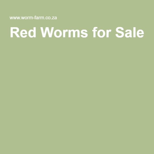 Red Worms for Sale