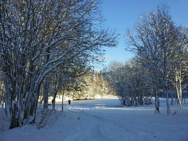 Vinter i Estenstadmarka