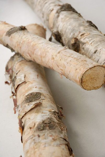 Natural White Birch Poles Logs - contemporary - accessories and decor - Save-on-crafts