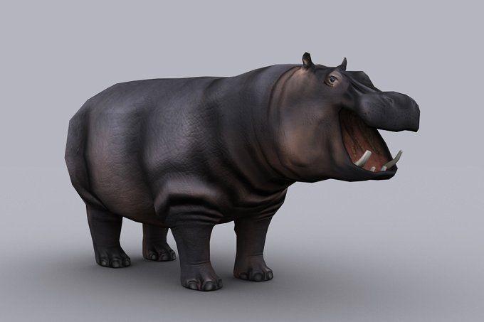 HIPPOPOTAMUS with Native File by PROTOFACTOR  on @creativemarket