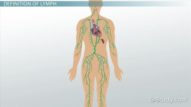 Lymphatic System Diagram For Kids Koibana Info Lymphatic System Diagram Lymphatic System Human Body Diagram