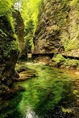 Vintgar Gorge, Triglav National Park, Slovenia: Photos, Gorge Gorge, Slovenia, Beautiful Places, Triglav National, National Parks, Green One, Bridges, Mothers Natural