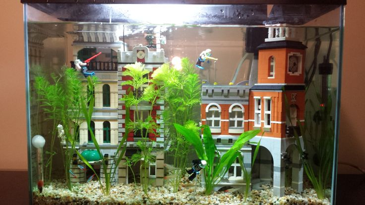 Lego fish tank. A little worried. Can fish get scratched and hurt themselves?
