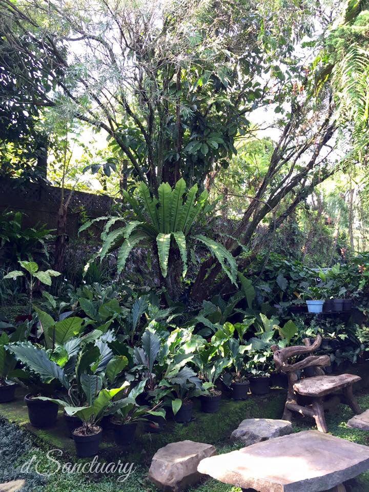 d'Sanctuary, Bogor-Indonesia