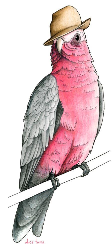 Birds in Hats.: Galah in a Trilby