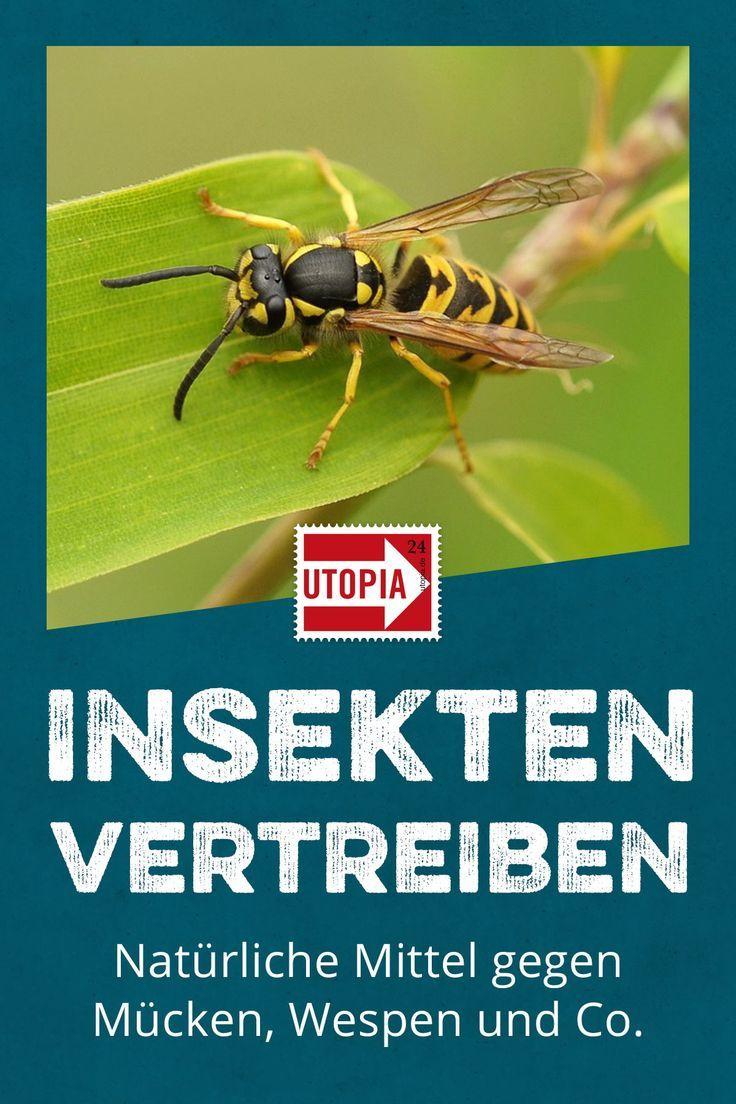 Insekten Vertreiben Naturliche Hausmittel Gegen Mucken Wespen Und Co Hausmittel Gegen Mucken Ameisen Bekampfen Insekten