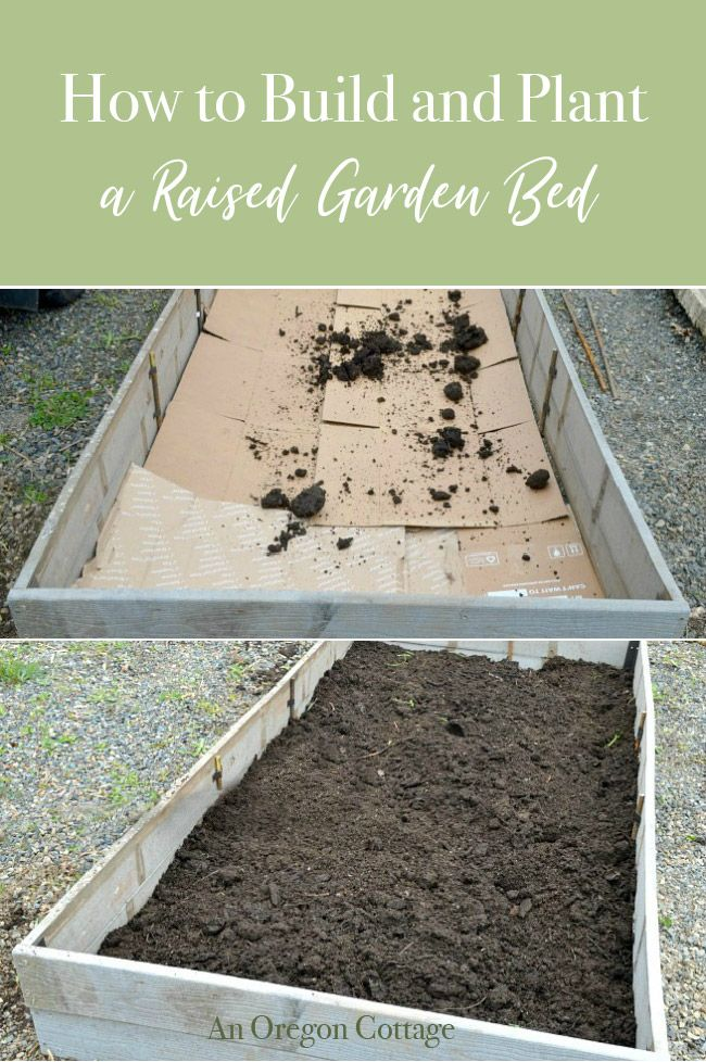 How To Build Plant A Low Maintenance Raised Garden Bed With